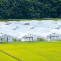 農業用フィルム